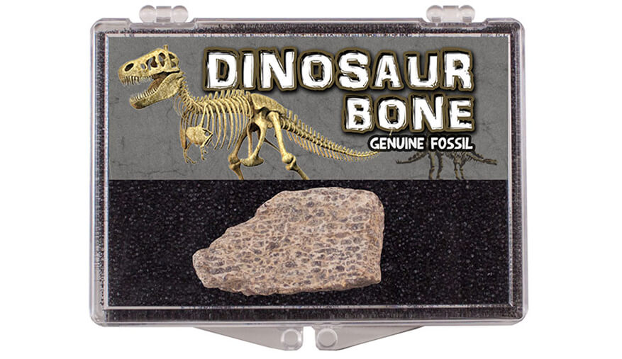 dinosaur fossil in plastic boxes